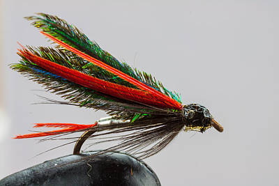 Trout Fly  Print by Craig Lapsley