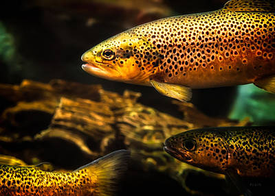 Metaphysical Photograph - Trout Swiming In A River by Bob Orsillo
