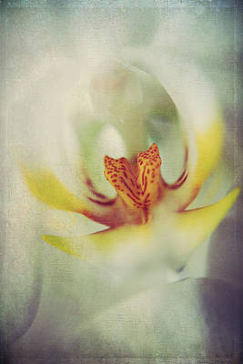 Orchid Digital Art - True by Laurie Search