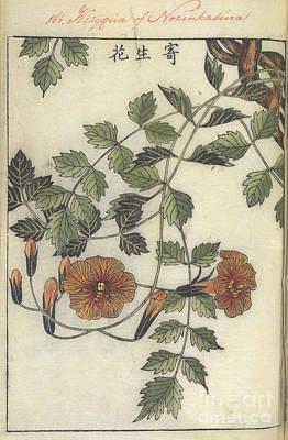 Trumpet Flower Print by British Library