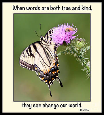 Butterfly Photograph - Truth And Kindness by Kerri Farley
