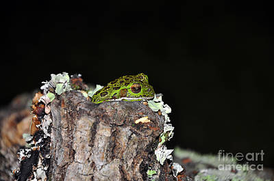 Cute Tree Images Photograph - Tuckered Tree Frog by Al Powell Photography USA