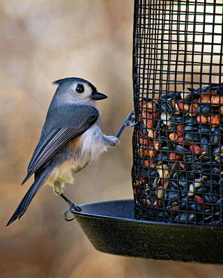 Tufted Titmouse Photograph - Tufted Stance by Lana Trussell