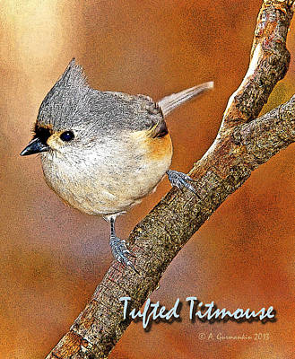 Print featuring the photograph Tufted Titmouse by A Gurmankin