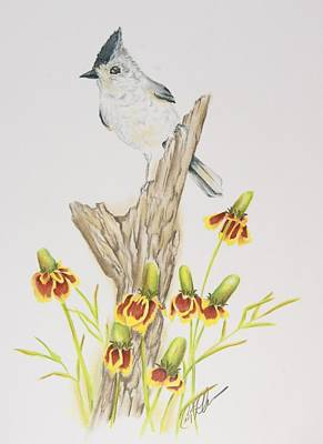 Titmouse Drawing - Tufted Titmouse by Cindy Ohama