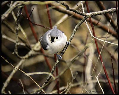 Chickadee Photograph - Tufted Titmouse On The Watch by LeeAnn McLaneGoetz McLaneGoetzStudioLLCcom