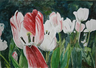 Tulip Festival Painting - Tulip Bed by Betty-Anne McDonald