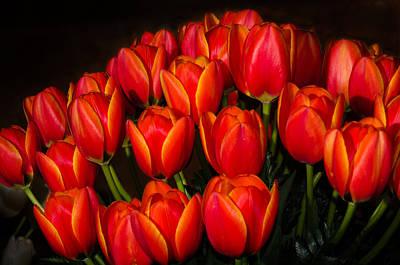 Tulip Bouquet Print by Brian Xavier