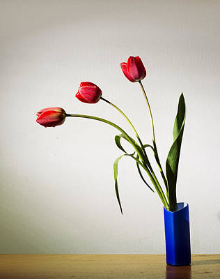 Tulip Composition Original by Ivan Vukelic