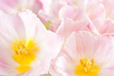 Subtle Pink Tulip Macro Inside  Print by Arletta Cwalina