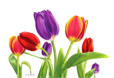 Pinks And Purple Petals Painting - Tulip Garden On White by Sarah Batalka