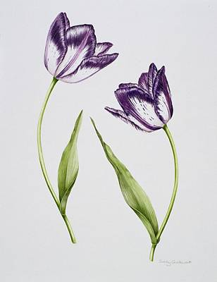 Variegated Painting - Tulip Habit De Noce by Sally Crosthwaite