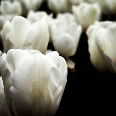 Tulips Photograph - #tulip #lale #çiçek by Ozan Goren