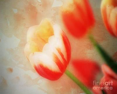 Floral Photograph - Tulip Treasure by Sharon Johnston