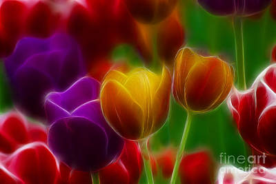 Tulips-7060-fractal Print by Gary Gingrich Galleries