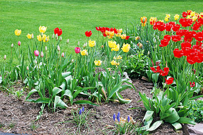 Landscape Photograph - Tulips  by Aimee L Maher Photography and Art Visit ALMGallerydotcom