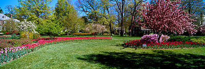 Maryland Photograph - Tulips And Cherry Trees In A Garden by Panoramic Images
