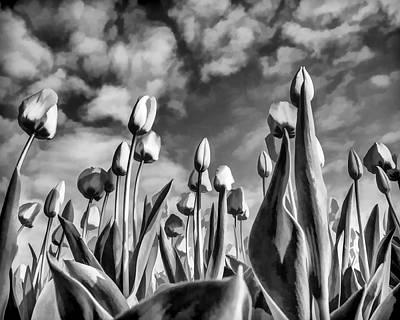 Dramatic Digital Art - Tulips Black And White by Flo Karp