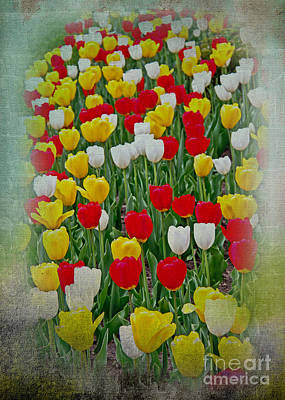Tulips In A Field Print by Tom Gari Gallery-Three-Photography