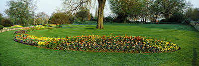 Tulips In Hyde Park, City Print by Panoramic Images