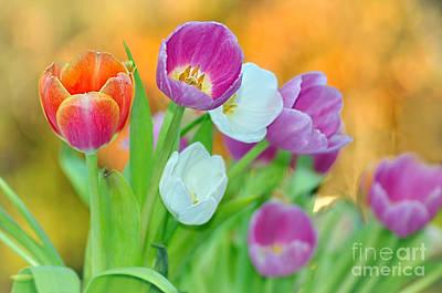 Genus Photograph - Tulips On Soft Autumn Bokeh by Kaye Menner