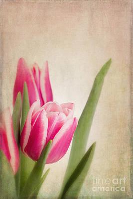 Flower Design Photograph - Tulips Vintage by Jane Rix