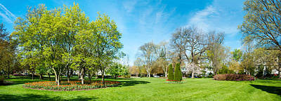 Maryland Photograph - Tulips With Trees At Sherwood Gardens by Panoramic Images