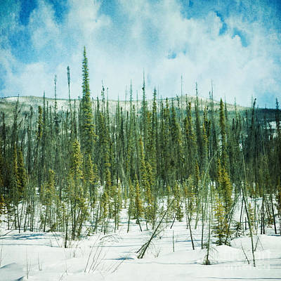 Winter Scenes Photograph - Tundra Forest by Priska Wettstein