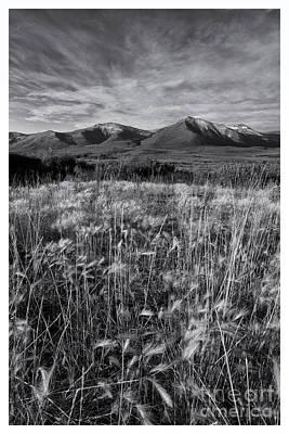 Tundra Summer Print by Priska Wettstein