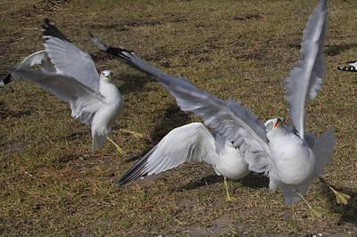 Seagull Photograph - Tuned by Betsy C Knapp