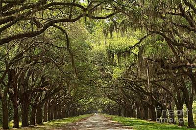 Georgia Plantation Photograph - Tunnel Of The Oaks by Adam Jewell