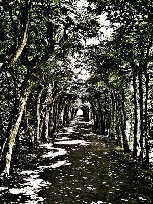 Tunnel Of Trees ... Print by Juergen Weiss
