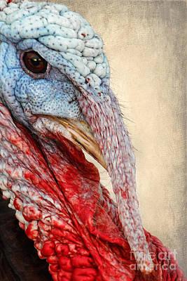 Gobble Photograph - Turkey by Darren Fisher