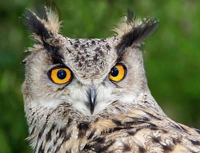 Disc Photograph - Turkmenien Eagle Owl by Nigel Downer
