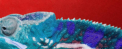 Turquoise Chameleon On Red Print by Serge Averbukh