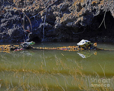 Small Turtle Photograph - Turtle And Frog On A Log by Al Powell Photography USA