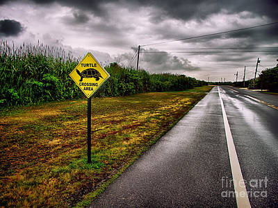 Turtle Crossing Area Print by Mark Miller