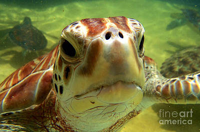 Snorkeling Photograph - Turtle Face by Carey Chen