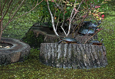 Turtle Haven Original by Suzanne Gaff