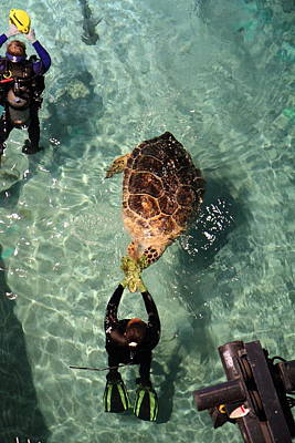 Turtle Photograph - Turtle - National Aquarium In Baltimore Md - 121216 by DC Photographer