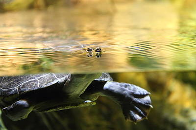 Turtle Photograph - Turtle - National Aquarium In Baltimore Md - 12124 by DC Photographer