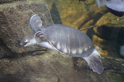 Sealife Photograph - Turtle - National Aquarium In Baltimore Md - 12129 by DC Photographer