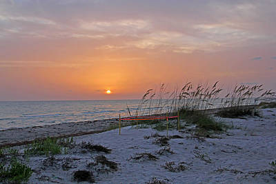 Florida Photograph - Turtle Nesting Time by HH Photography of Florida
