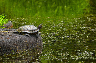 Pond Turtle Photograph - Turtle On A Rock 2 by Sharon Talson