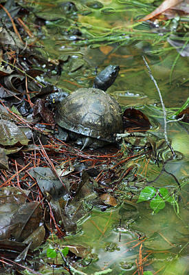 Wildlife Photograph - Turtle Soup II by Suzanne Gaff