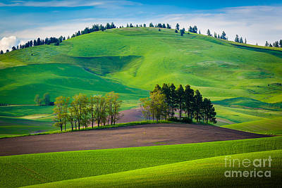 Rural Scenery Photograph - Tuscan Palouse by Inge Johnsson
