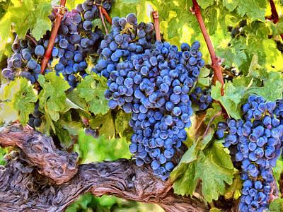 Tuscany Wine Grapes Print by Dominic Piperata