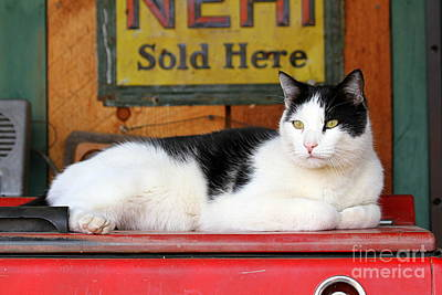 Tuxedo Cat At Old Gasoline Station Original by Catherine Sherman