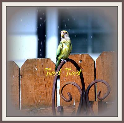 Lovebird Digital Art - Tweet Tweet by Kay Novy