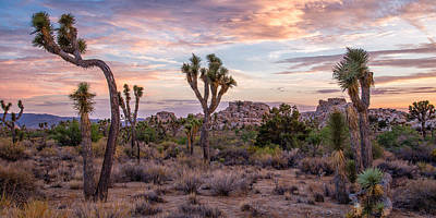 Twilight Comes To Joshua Tree Print by Peter Tellone